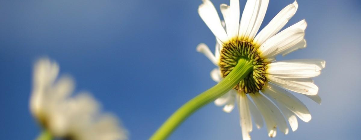 blur-flower-lawn-4204